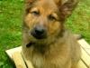 Balou am 16 Juni 2009