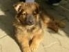 Balou am 16 Mai 2009