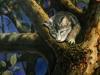 Katze im Apfelbaum ÖlLw 50x40 September 1991