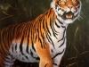 Sibirischer Tiger ÖlLw 80x60 November 1996
