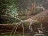 Wasseramsel ÖlLw 50x60 Oktober 1995
