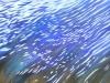 Reflektionen im Wasser 60x30 ÖlLw Februar 2009