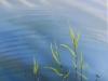 Wasserpflanzen 60x30 ÖlLw November 2011