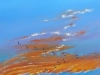 Rückkehr der Kraniche Öl/Lw 80x40 cm Februar 2015